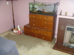 Fish tank partially emptied onto the living room