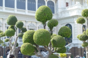 Cool Dr Seuss style trees at the Grand Palace