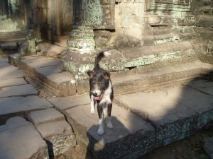 Dog at an ancient temple in Cambodia