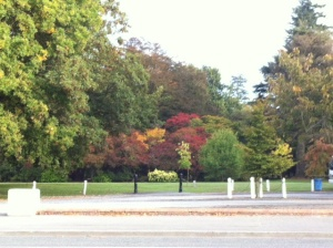 Autumn trees at Ashburton Domain