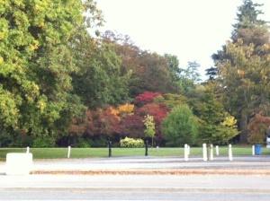 Autumn trees at Ashburton Domain