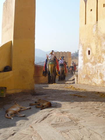 Elephants carrying tourists up to this particular fort - I am told that hill walking for elephants is terrible for their knees - we didn't ride