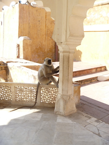 Monkey near one of the forts