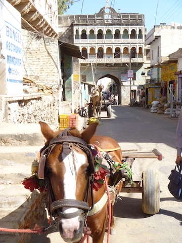 A pony with a cart - note the camel with the cart behind it