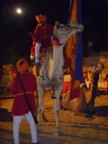 Camel from a night time wedding procession