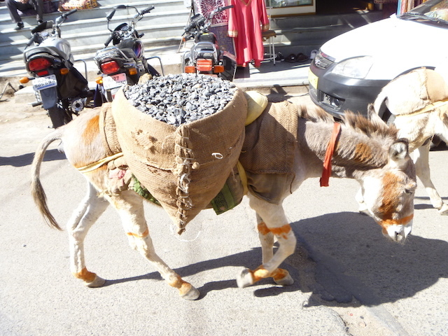 A donkey carrying a heavy load - life is hard for these poor working animals
