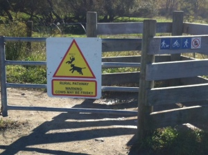 """Rural Pathway Warning Cows May be Frisky"""