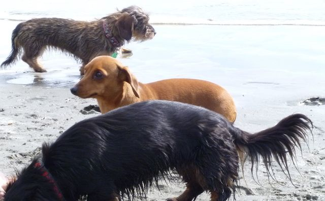 Penny (foreground), Sophie (middle) and Mina (background)