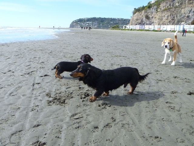 Fern and Jak meet a wannabe dachshund
