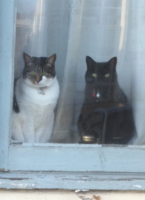These two staring out the window - presumably waiting for the sun