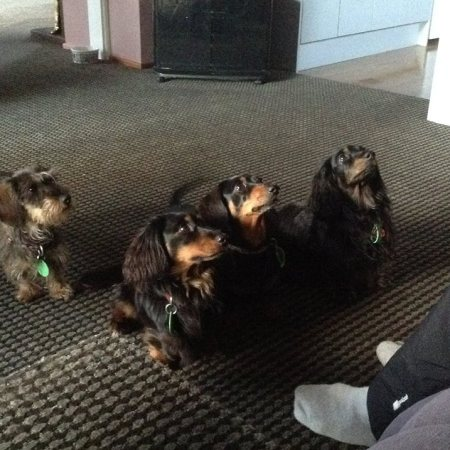 Look at those little attentive faces