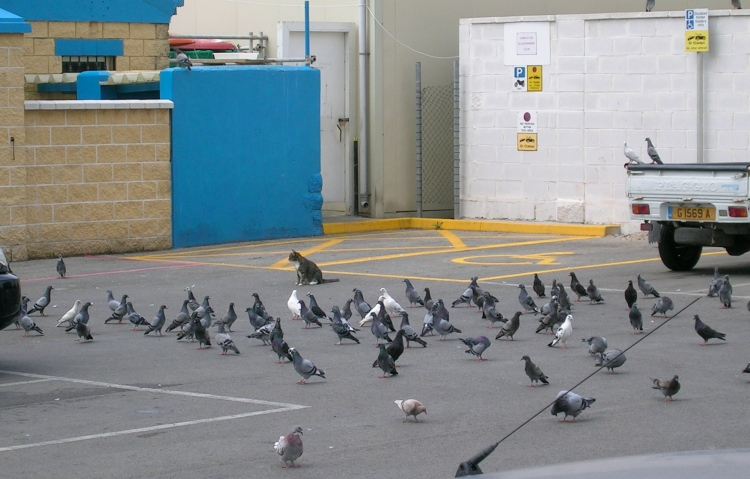 The Cat among the Pigeons