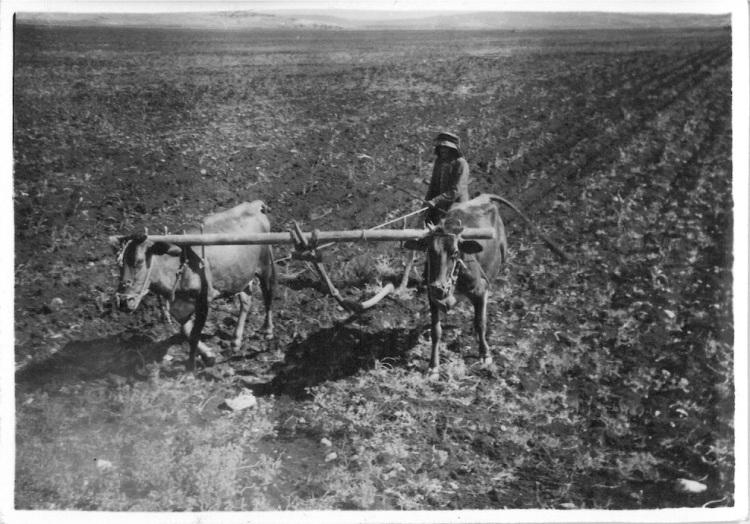 Bab-El-Hawa - Native farmers using primitive plough