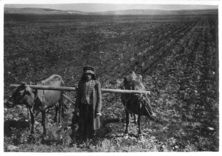 Native farmer with oxen team