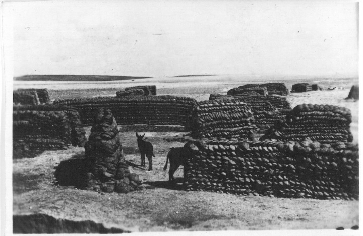 Showing piles of dung ready for use as fuel