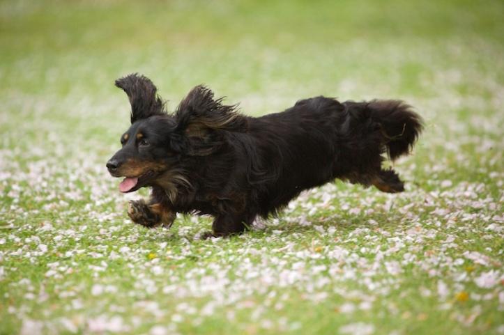 doglets (15)