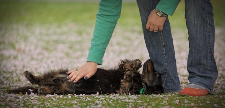 doglets (19)