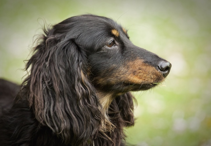 doglets (21)
