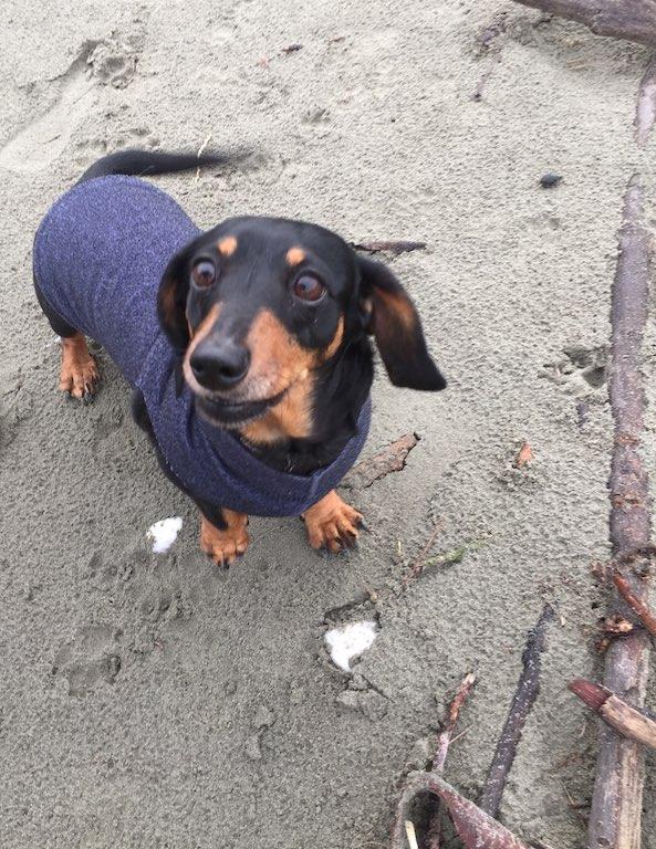 """OMG, OMG, OMG - I am so excited to be a the beach!"""