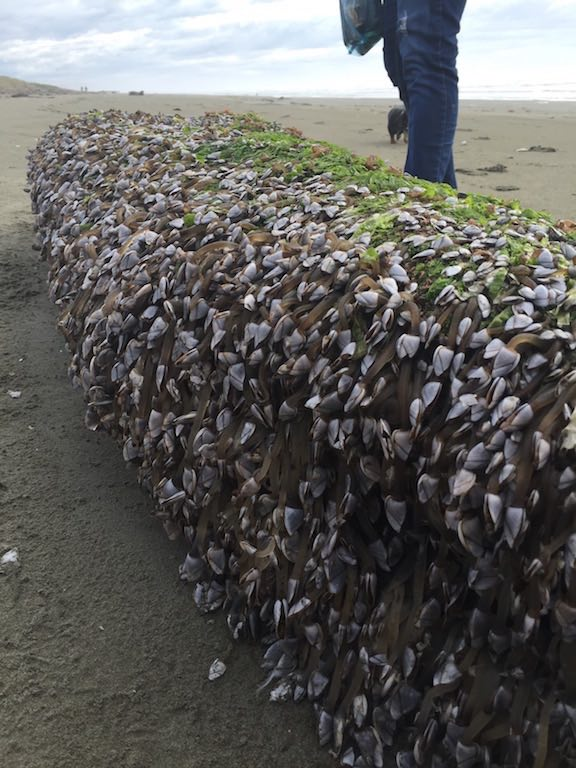 Cool oceanic item with mussels attached