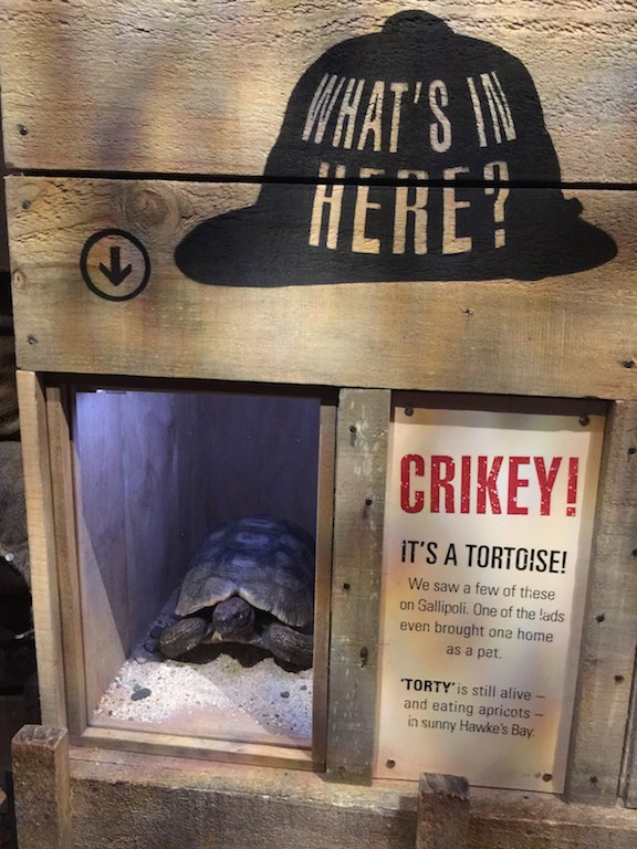 The only remaining Gallipoli survivor lives in Hawke's Bay, a tortoise bought home as a pet.